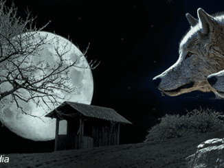 Story-of-the-shepherd-and-the-wolf