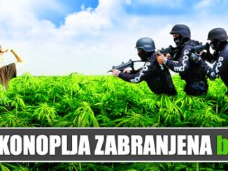 konoplja.png1