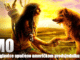 pismo-indijanskog-poglavice
