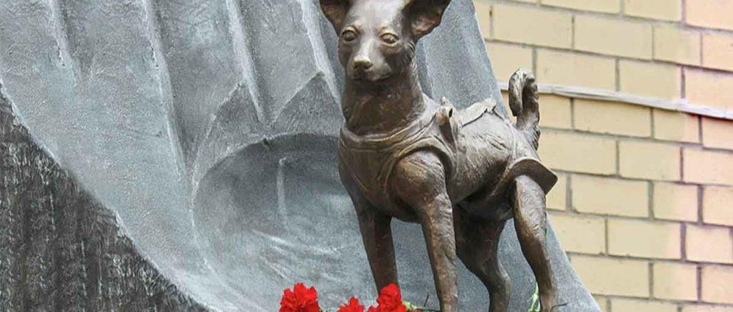 Lajka - Svemirska lutalica u misiji bez povratka | Priča o Lajki... ova priča postala je deo istorije, priča o jednom malom mešancu, koji je lutajući ulicama Moskve zalutao među zvezde... Lajka